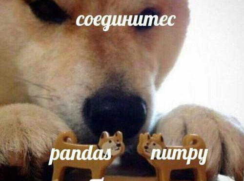 NumPyvsPandas: в чем разница между двумя библиотеками Python