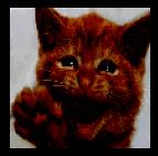 яркое и темное изображения в рамках Data Augmentation в TensorFlow